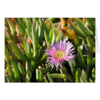 Iceplant Flower Card Blank