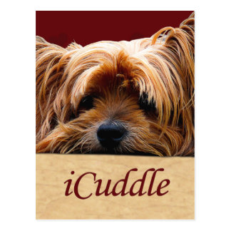 iCuddle Yorkshire Terrier Postcard