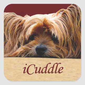 iCuddle Yorkshire Terrier Square Sticker