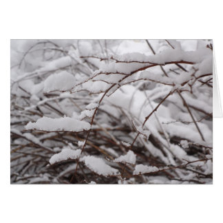 Icy Branches Card