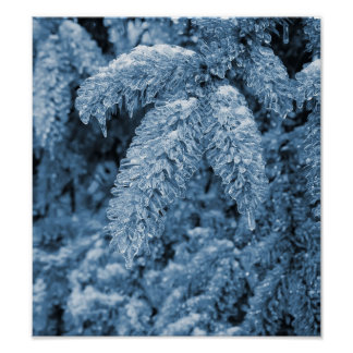 Icy pine tree posters