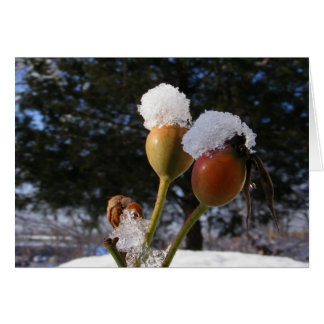 Icy Rose Hips ~ card