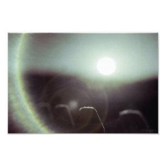 Icy Sun by Alexandra Cook Art Photo