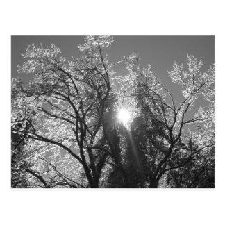 Icy Tree Postcard