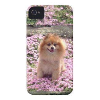 ID/Credit Card iPhone 4/4S Pomeranian Pink Flowers Case-Mate iPhone 4 Cases