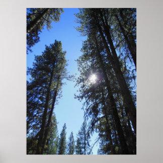 Idaho Mountain Pines Poster