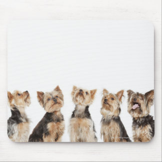 Identical dogs sitting together mouse pad