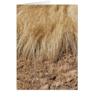 iDetail of a teff field during harvest Card