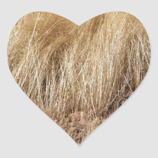 iDetail of a teff field during harvest Heart Sticker