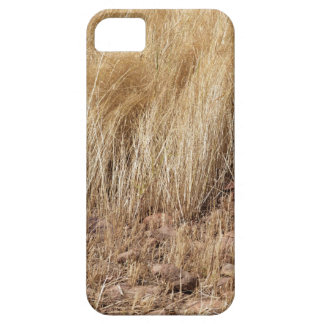 iDetail of a teff field during harvest iPhone 5 Cover