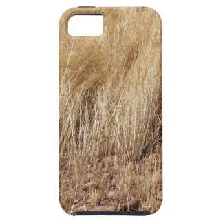 iDetail of a teff field during harvest iPhone 5 Covers