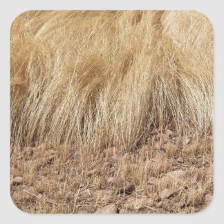 iDetail of a teff field during harvest Square Sticker