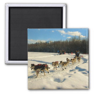 Iditarod Trail Sled Dog Race Square Magnet
