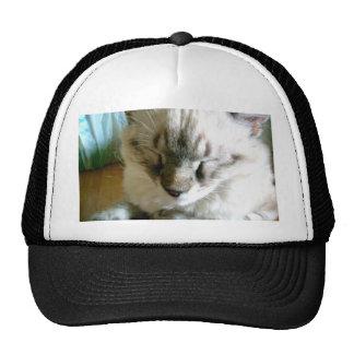 If I Were a Cat Hats