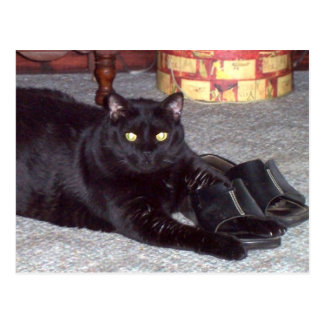 """If The Shoe Fits"" Cat Postcard"