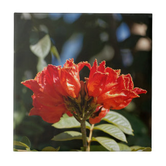 iFlowers of an African tuliptree Ceramic Tile