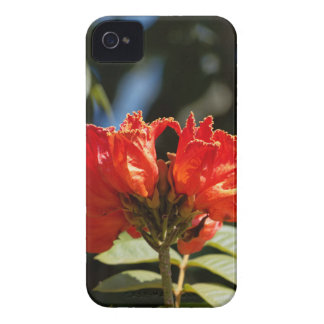 iFlowers of an African tuliptree iPhone 4 Case-Mate Case