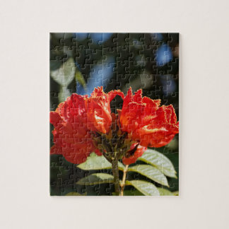 iFlowers of an African tuliptree Jigsaw Puzzle