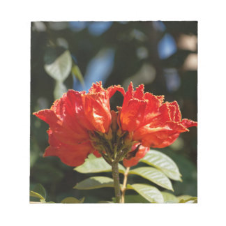 iFlowers of an African tuliptree Notepad