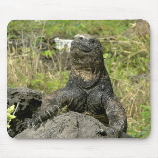 Iguana and plants of the Galapagos Mouse Pad