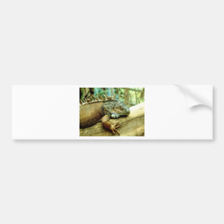 Iguana Bumper Sticker