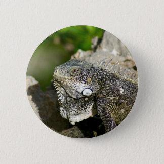 Iguana, Curacao, Caribbean islands, Photo 6 Cm Round Badge
