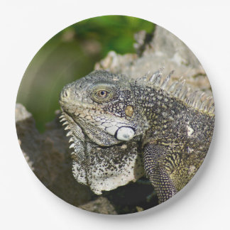 "Iguana, Curacao, Caribbean islands, Photo 9"" Paper Plate"