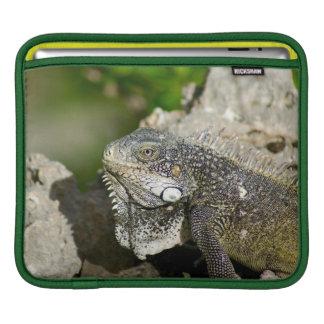 Iguana, Curacao, Caribbean islands, Photo iPad Sleeve