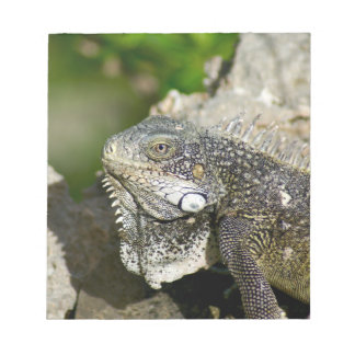 Iguana, Curacao, Caribbean islands, Photo Notepad