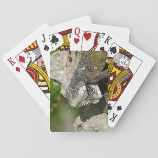 Iguana, Curacao, Caribbean islands, Photo Playing Cards