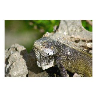 Iguana, Curacao, Caribbean islands, Photo Stationery