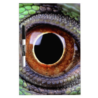 Iguana eye dry erase boards