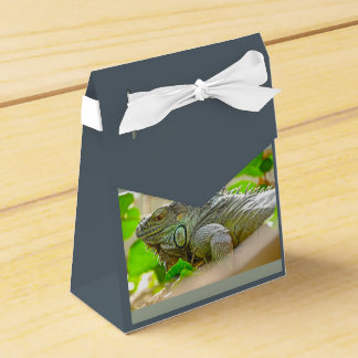 Iguana Favour Box