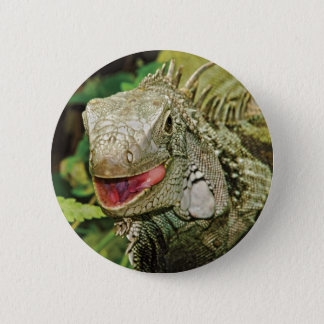 Iguana green 6 cm round badge