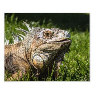 Iguana Lizard Art Photo