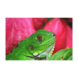 Iguana - pink and green canvas print