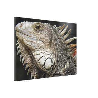 Iguana portrait canvas print