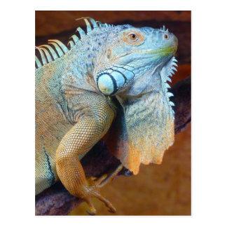 Iguana reptile postcard