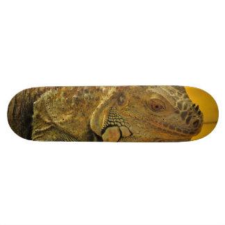 Iguana Skate Board Decks
