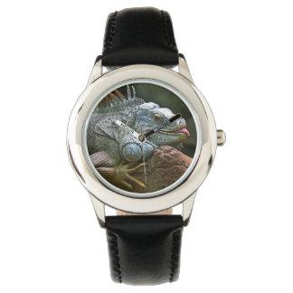 Iguana watches