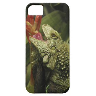 Iguana Western Cape Province, South Africa Case For The iPhone 5