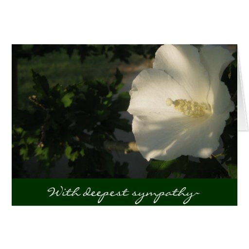 II With deepest sympathy~ Greeting Card