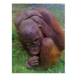Illegal Wildlife Pet Trade Victims Postcard