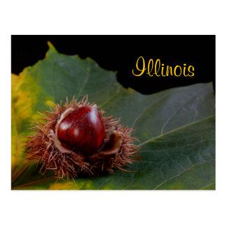 Illinois, Autumn Leaf With Nut Postcard