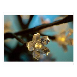 Illuminated Cherry Blossom Postcard