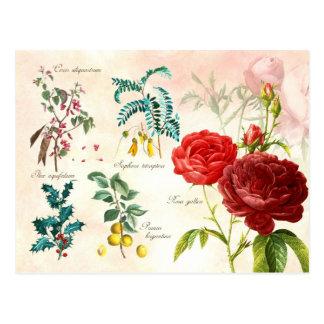 Illustrated flowering plants postcard