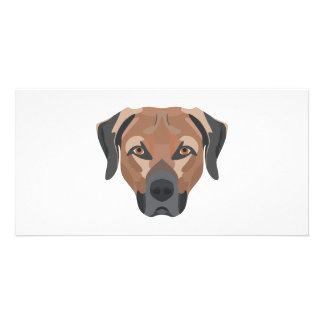 Illustration Dog Brown Labrador Card