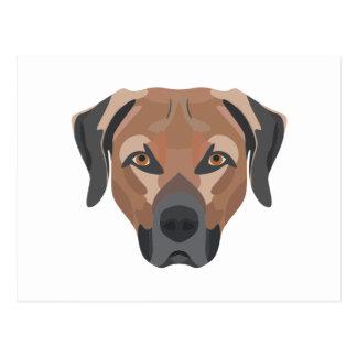Illustration Dog Brown Labrador Postcard