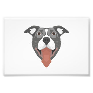 Illustration Dog Smiling Pitbull Photo Print