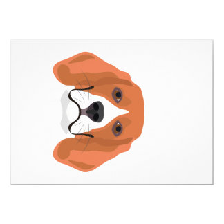 Illustration dogs face Beagle Card